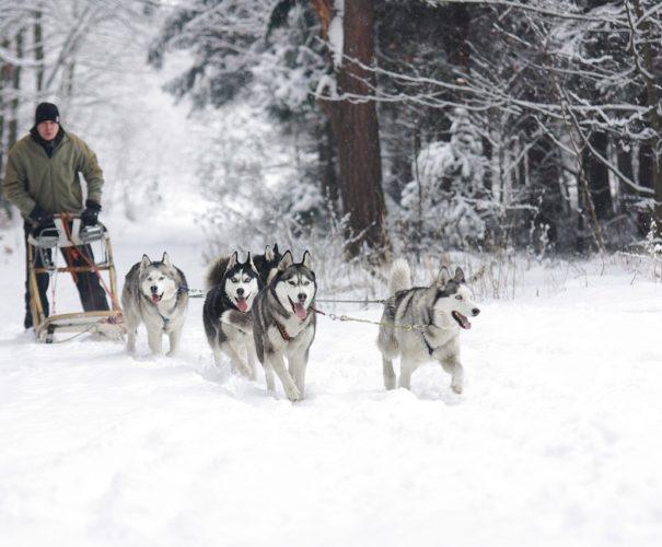 Voyage sur Mesure Laponie, séjour en laponie tout compris - Ktravel