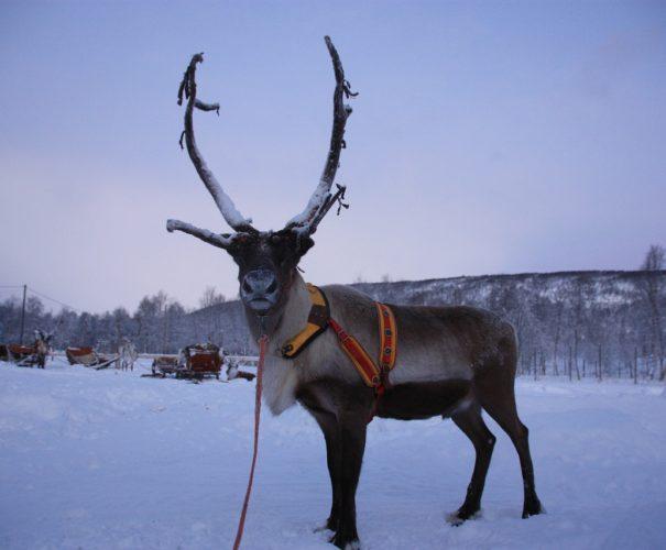 Voyage Tout Compris Laponie - Voyage de Luxe Laponie - Agence de Voyage sur Mesure Ktravel